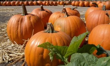 7 Reasons Why Pumpkin is Healthy for Seniors