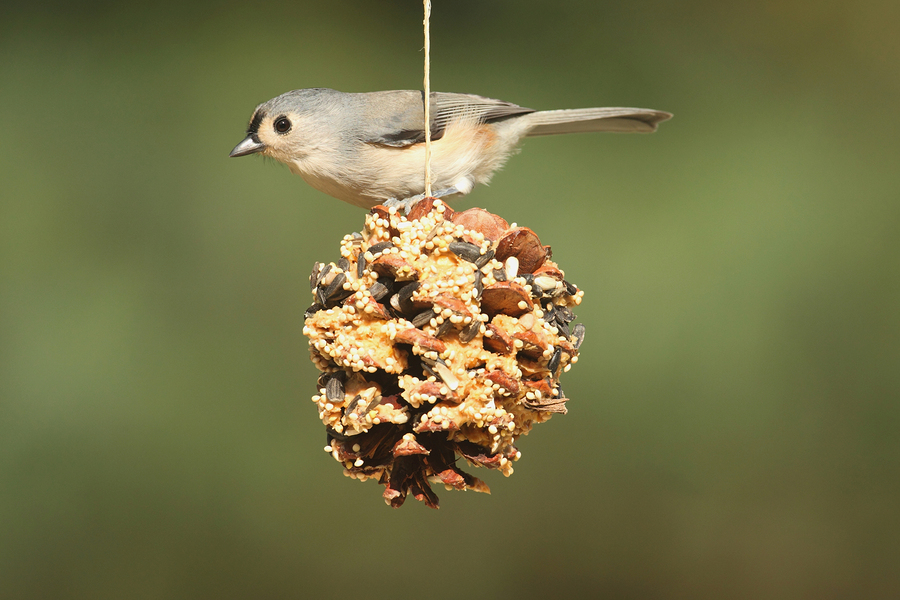Bird Feeding to Build a Strong Bond Between Children and Their Grandparents